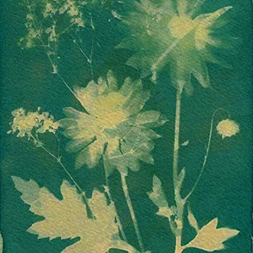 SunCreations Cyanotype Paper High Sensitivity Sunprint Nature Printing Kit82 x 114 A4 12-Sheets SunSolar Activated Yellow Back