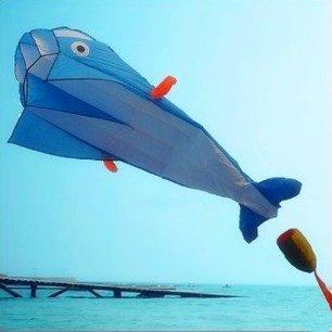 KENGELÂ Blue 3D Kite Huge Frameless Soft Parafoil Giant Blue Dolphin Breeze Kite