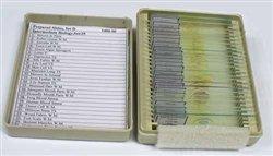 Science Purchase-Prepared Slide Set Intermediate Biology Set