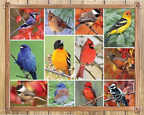 Springbok Puzzles Songbirds Jigsaw Puzzle 100 Piece