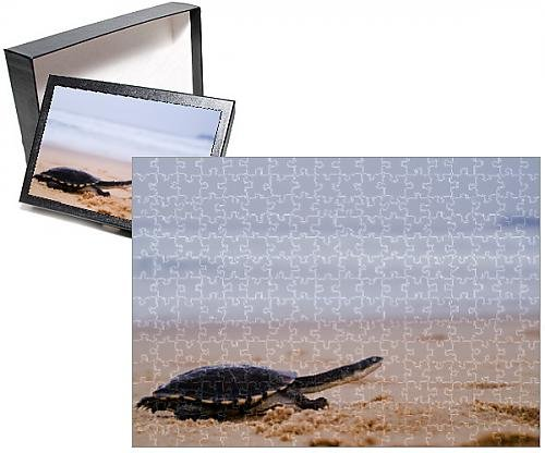 Photo Jigsaw Puzzle of Pet turtle running along sand by sea